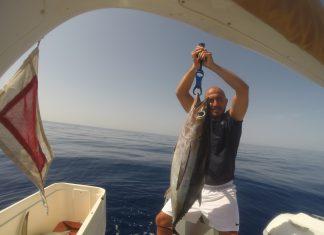 ton balığı avı